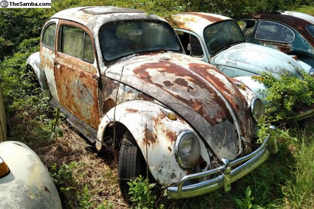 TheSamba com :: VW Classifieds - VW Beetle Parts Car NOT