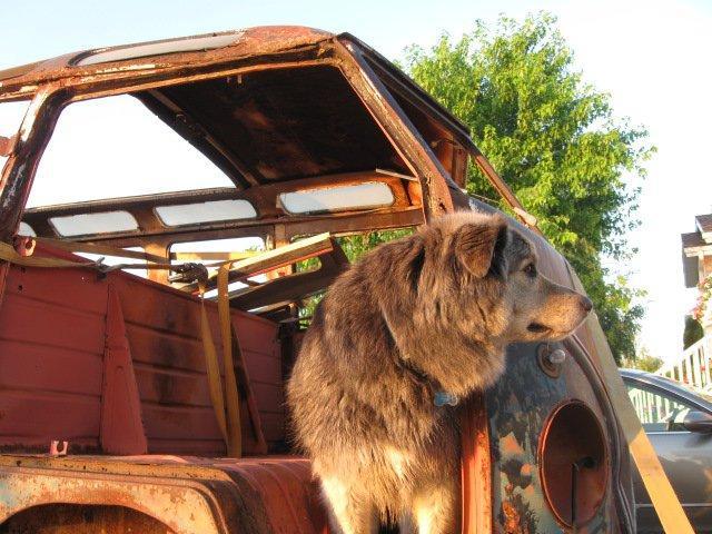 My dog and the barndoor