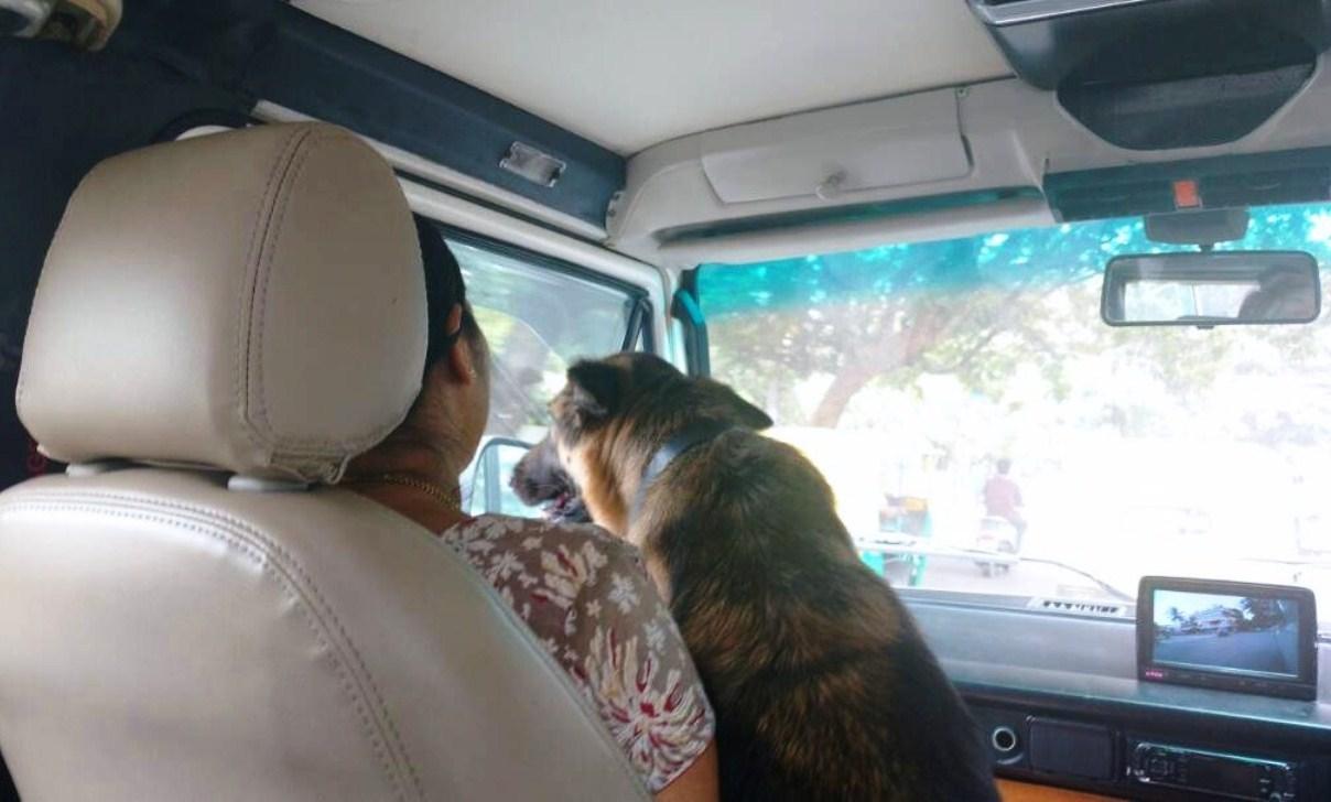 Dogs in van