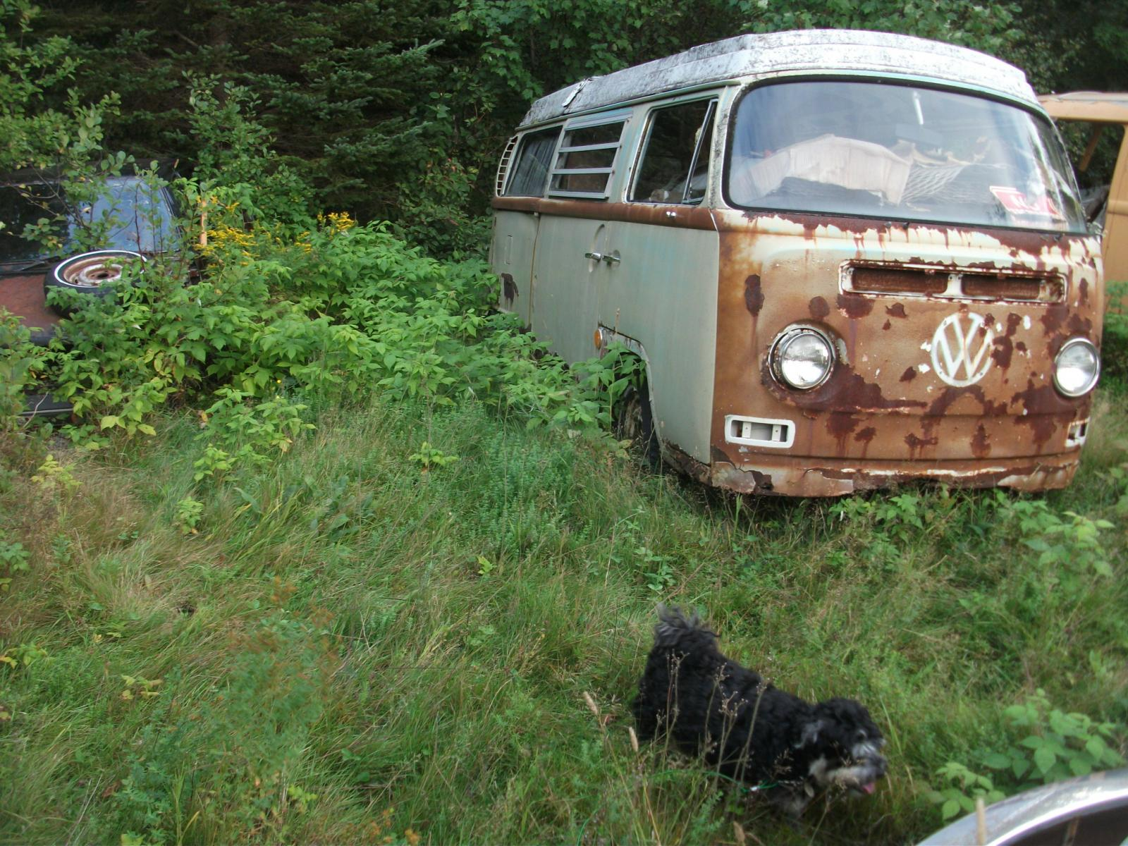 Dogs and VWs