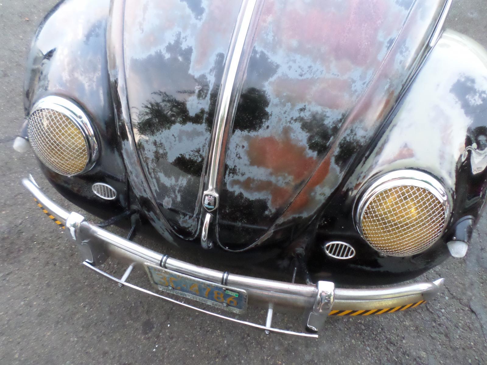 56 black oval beetle