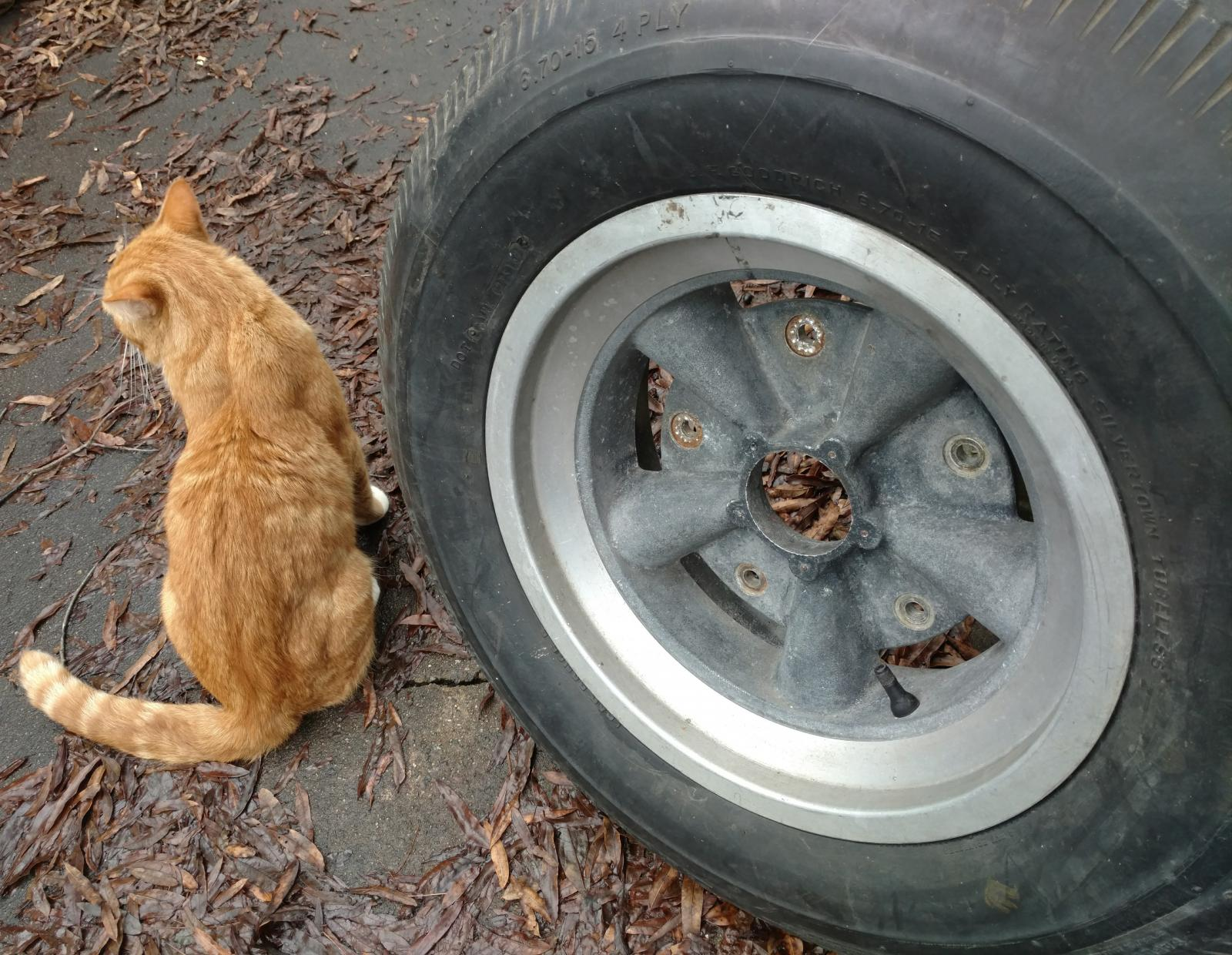 Cats and VWs