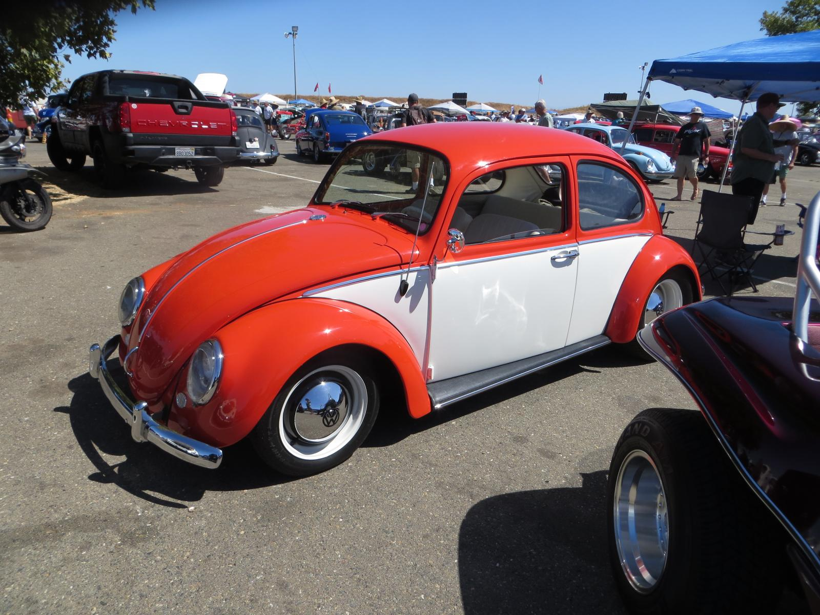 BUGS at Bugorama #84, Sun. Sept 1st, 2019 in Sacramento