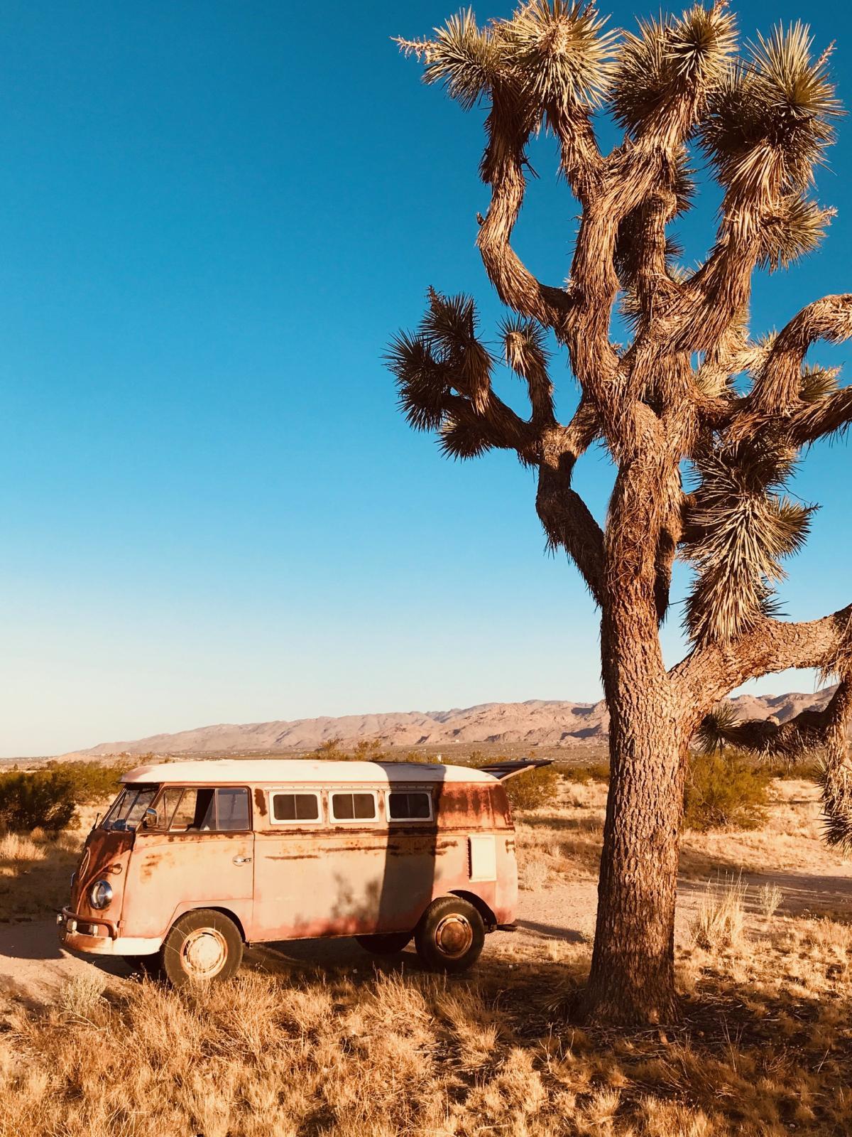 1960 Desert Bus Walkthrough WT Panel SWR Original Paint Joshua Tree California Off Road Dirt Type 4 Big Nut Golden Hour Solitude Summer