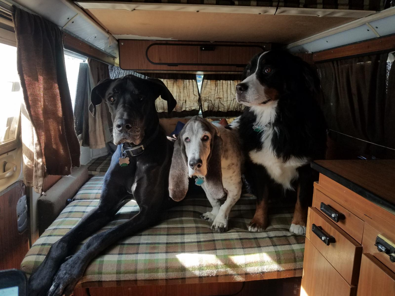 canine co-pilots
