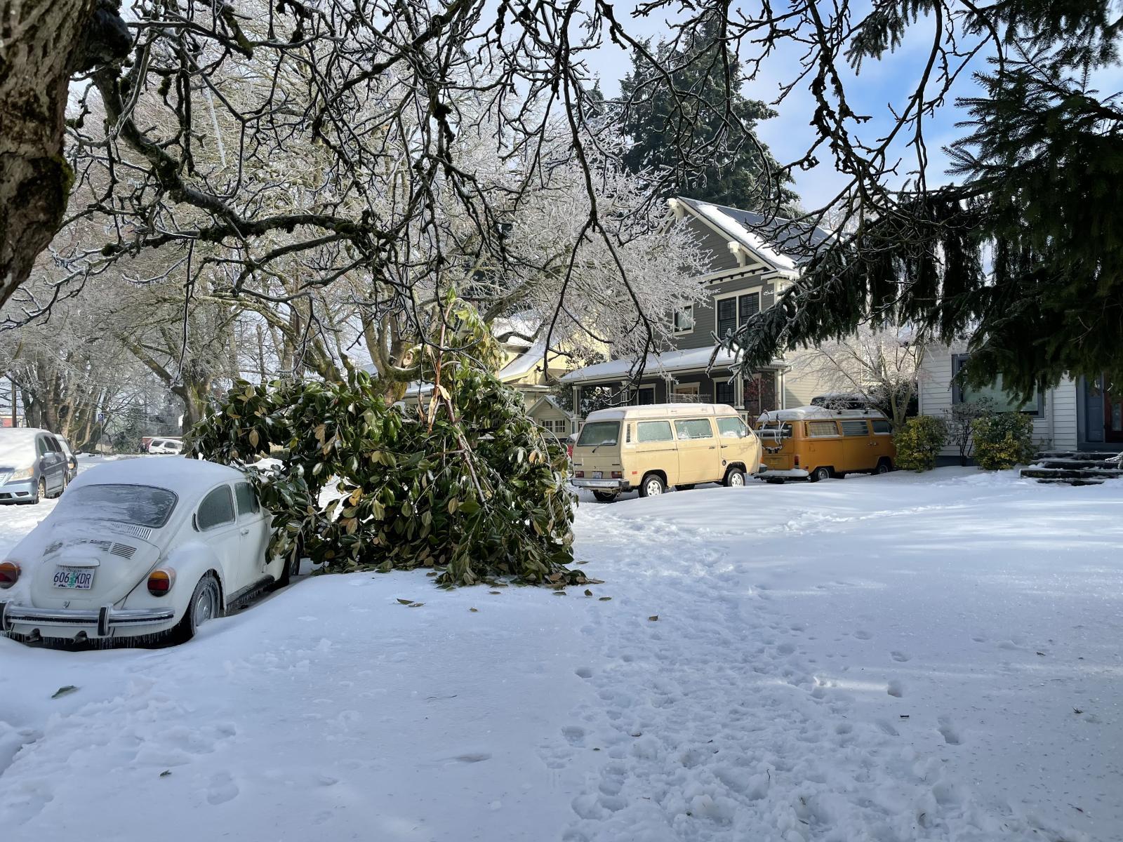 VWs in snow
