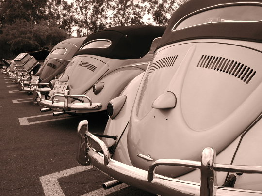 Bug Black & White