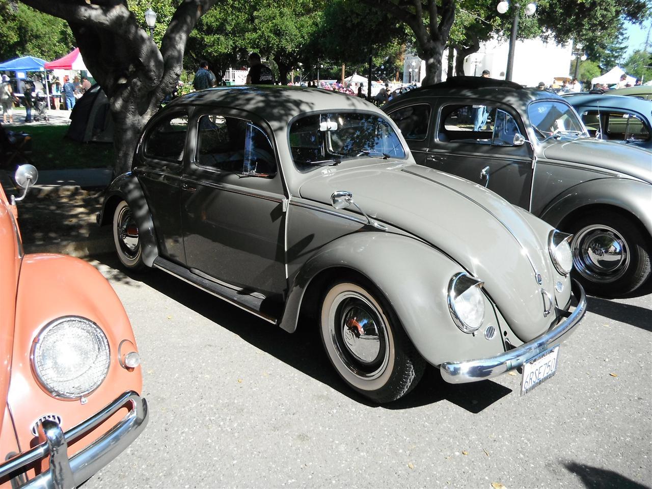 Oval-Window Beetle