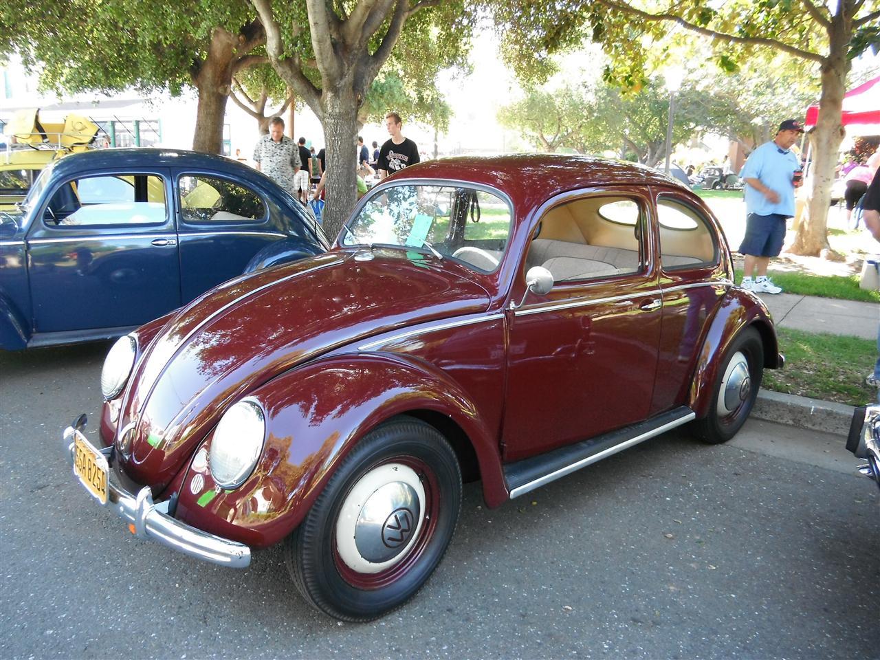 Red Split-Window Beetle