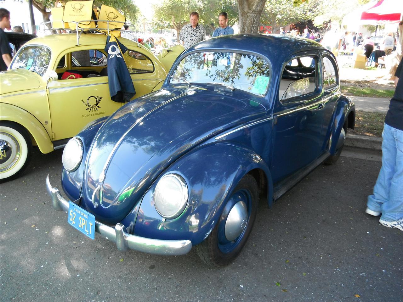 Blue Split-Window Beetle