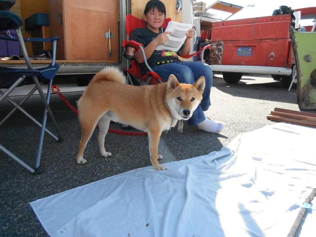 Swap meet photo - Cool dog