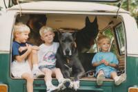 3 dogs 3 boys