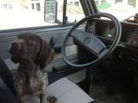 Our canine co-pilot