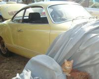 Tony and the Ghia