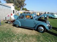 Blue Split-Window Ragtop Beetle
