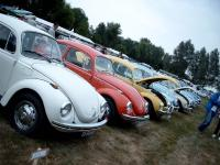 Beetles in a row