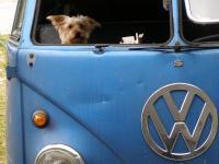 World's Greatest Silky Terrier