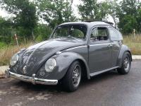63 ragtop beetle