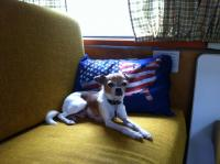 Toby in the camper
