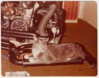 Snapshot From 1980