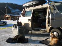 van dogs