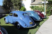 Split Window Beetle rears