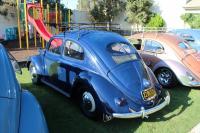 Blue Split Window Beetle