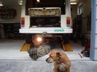 dog and bay