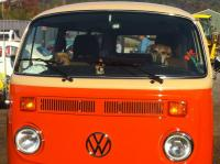 Dogs in VW's