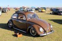 Oval Window Beetle