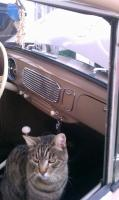 VW  cat