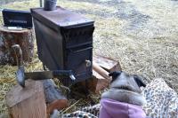 Camp Lily Pug