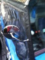 Buggy side & rear windows