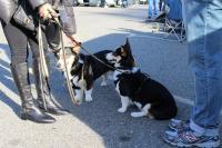 Swap meet photos - dogs