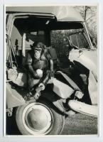 Wrecked Barndoor and ape