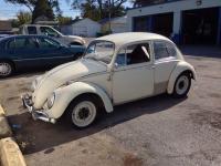 my 65 beetle