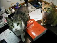 Editorial Assistants