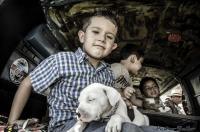 Kids & Dogs