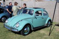 Turkis Ragtop Beetle