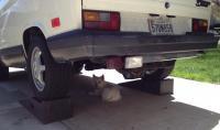 Dog under van