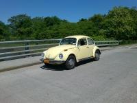 Daisy on the bridge