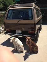 Westy in Driveway w/dogs