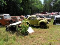 shorty beetle in junkyard