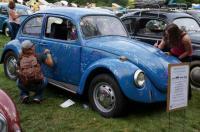 autograph beetle