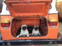 Vw& dogs