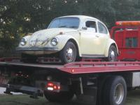Frank's First Beetle