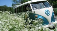 67 Kombi in the Queen Ann's lace