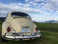 1967 Canadian standard Vw bug