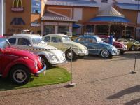 Beetles in Brasilia/DF/Brazil