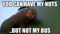 cts squirrel